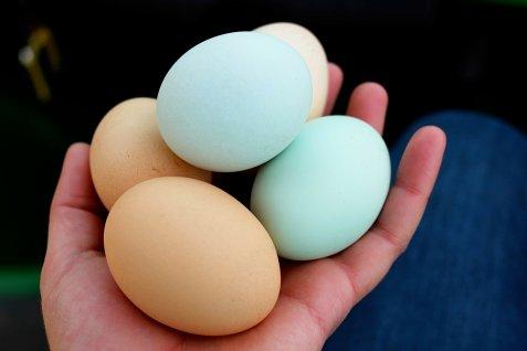 farm-eggs-in-hand